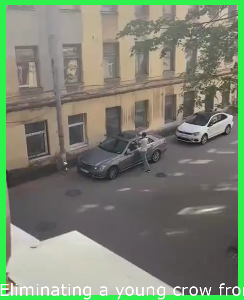 Removing a young crow from the roof of your car