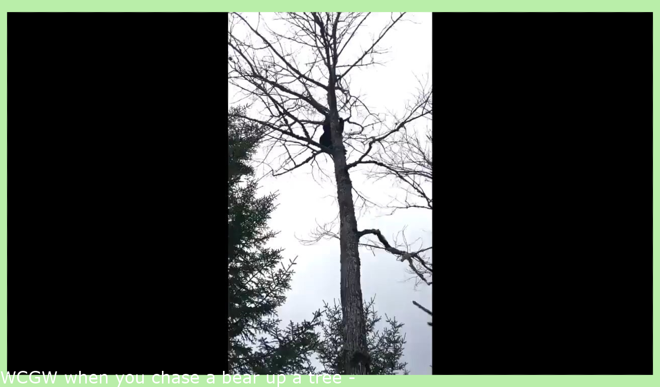 WCGW when you chase a bear up a tree