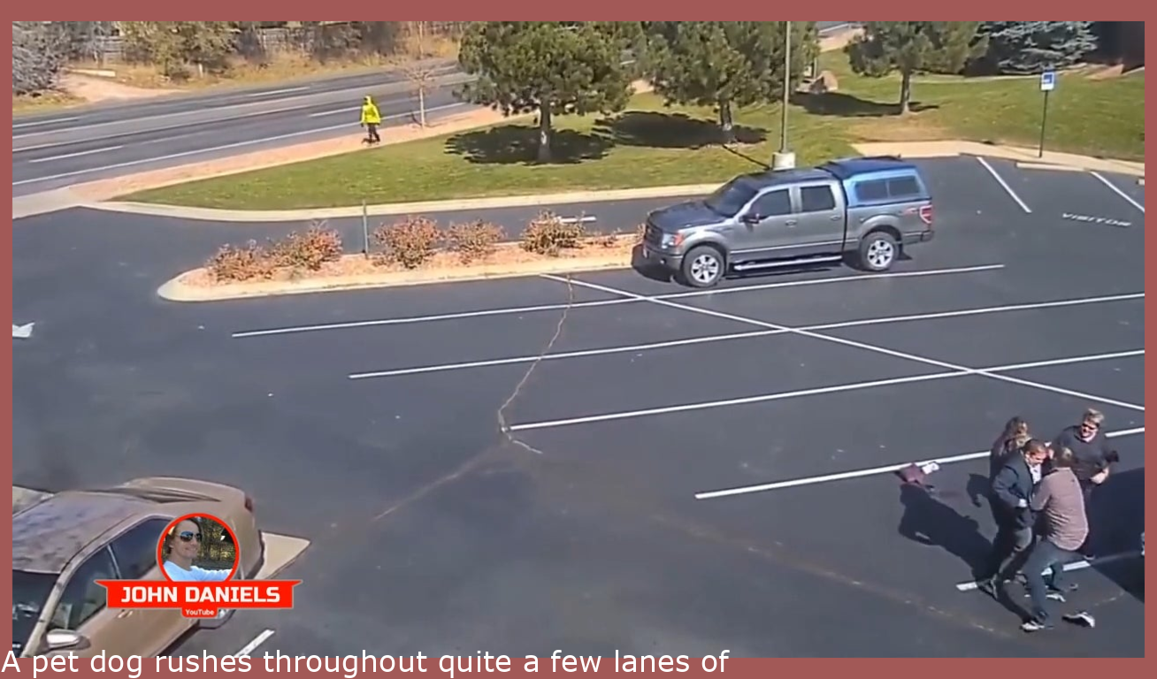 A dog rushes across several lanes of traffic to attack a little girl leaving church. It takes several adults and a knife to save the child.