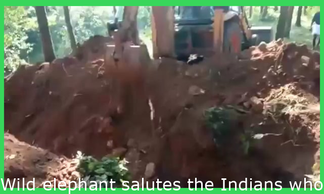 Wild elephant salutes the Indians who rescued their baby elephant from a ditch.
