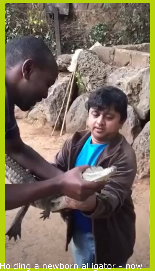 Holding a baby alligator